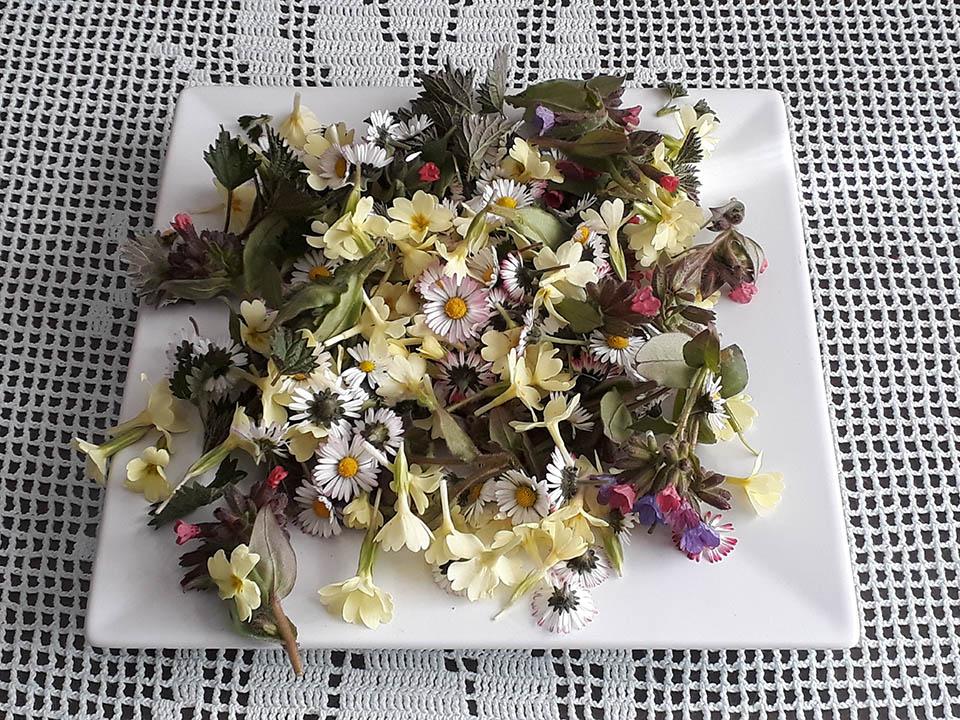Katere rastline za domač zeliščni čaj?