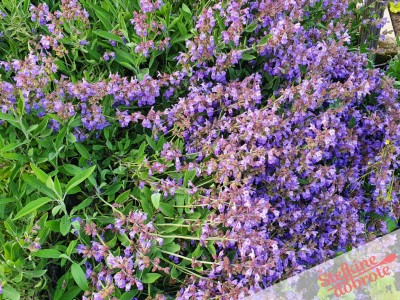 1 cvetovi